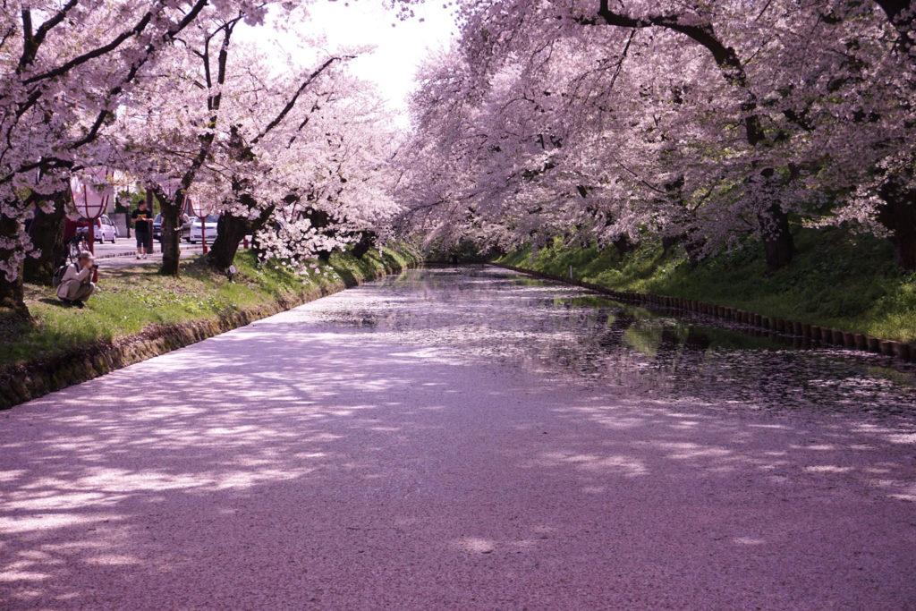 青森県『弘前公園』の満開の桜