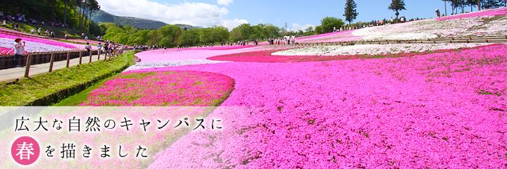 羊山公園『芝桜の丘』