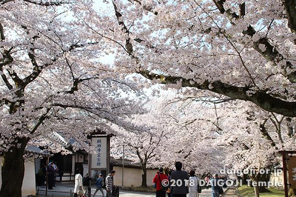 京都府『醍醐寺』の桜の風景