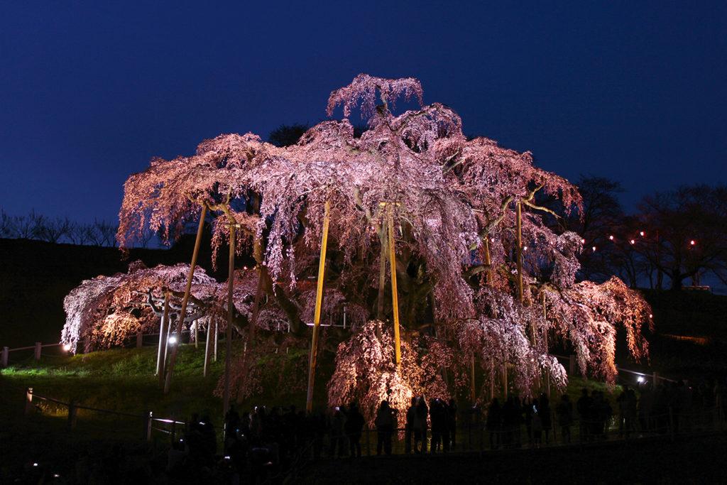 福島県『三春滝桜』のライトアップ写真