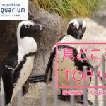 【ランキング】サンシャイン水族館の見どころトップテン