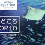 【9/6から 生き物たちのミニ運動会開催中】サンシャイン水族館の見どころトップテン