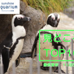 【11/1からさかなクンと秘密のラボ開催中】サンシャイン水族館の見どころトップテン