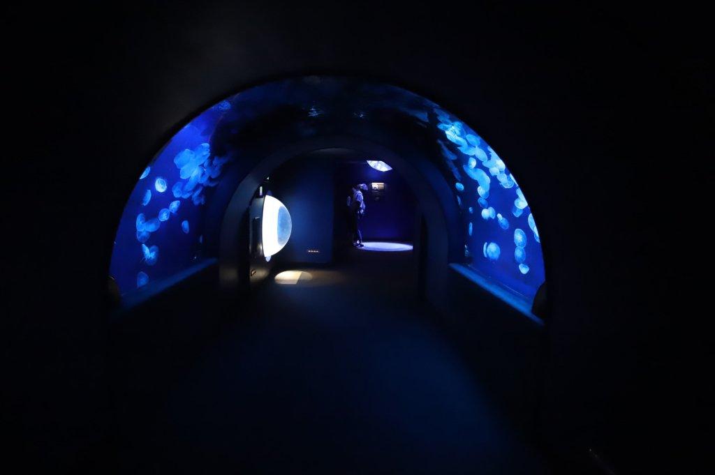 落水清掃前のトンネル水槽